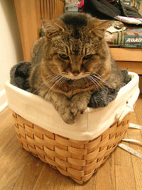 Cat_basket
