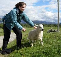 Chasing wool